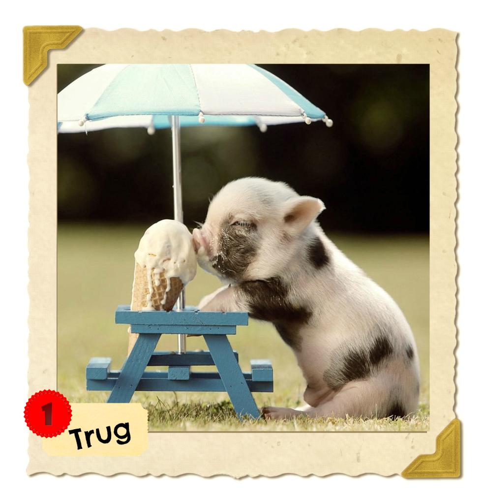 TRUG'S PHOTO