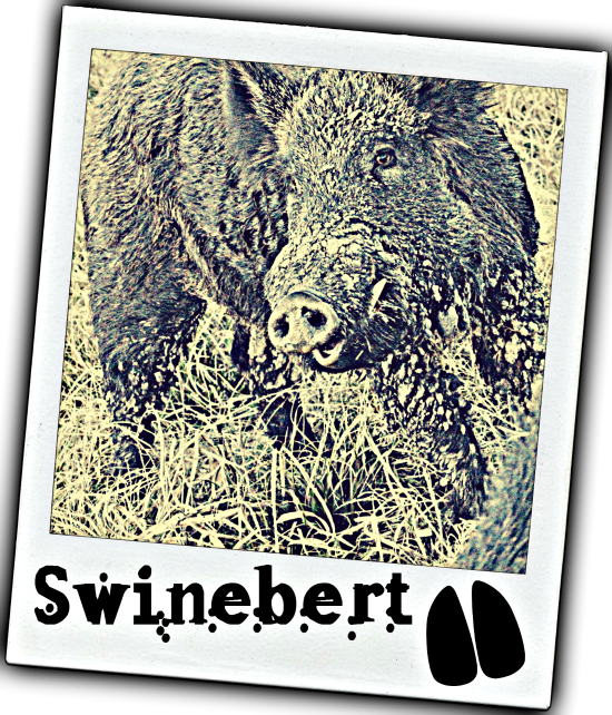 Swinebert (Grown Up 1) POLOAROID 2