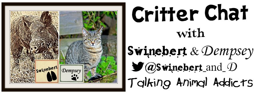 SD Critter Chat